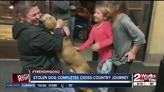 Stolen dog completes cross-country journey