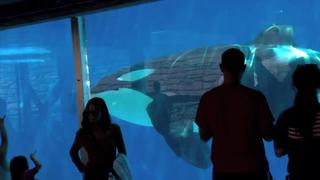 Summer fun: SeaWorld San Diego - Video