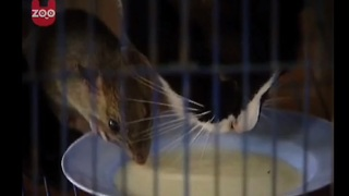 Do Cats Really Love Mice? - Video