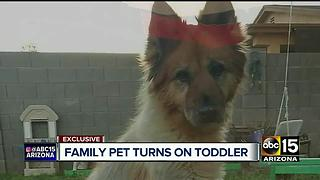 Family recovering after dog attacks child in San Tan Valley - Video