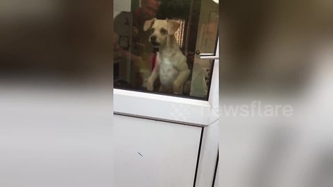 Dog uses invisible trampoline to beg to come outside