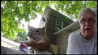 If You Think Squirrels Only LOOK Cute, Wait Until You Hear This One. - Video
