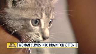 Tampa woman climbs into storm drain to rescue kitten - Video