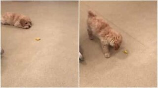 Curious puppy plays with a lemon