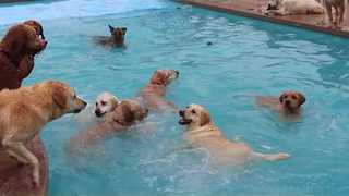 Dogs Love to Splash Around at Puppy Pool Party - Video