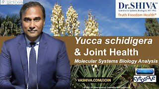 2 Ways How Yucca Affects Joint Health