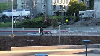 Funny moment turkeys attack US college student