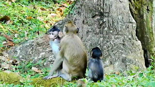 What Baby Monkey Doing On Young Baby  - Video