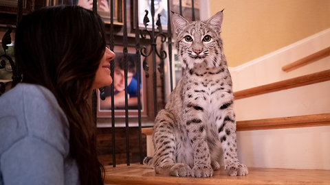 Family Shares Their Home With Two Bobcats