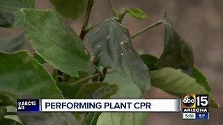 How to keep your plants safe during cold temperatures