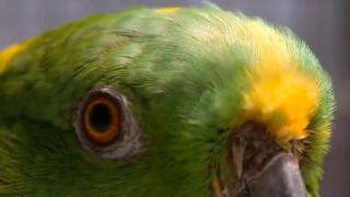 Rescued Parrots Are Helping Veterans Heal - Video