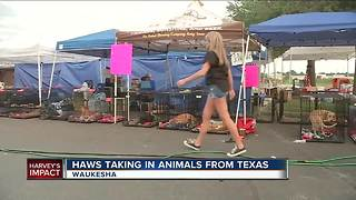 Lend a helping paw for animals neglected in Harvey disaster - Video