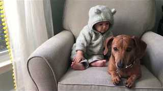 Adorable Baby Uses Dachshund Puppy as Tissue - Video