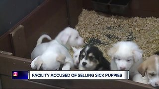 Facility accused of selling sick puppies