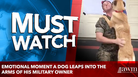 Emotional moment a dog leaps into the arms of his military owner