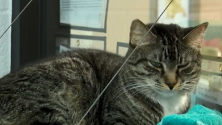 Animal shelter at capacity - Video
