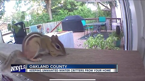 How to keep unwanted winter critters from your home