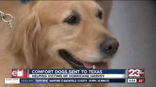 Comfort dogs sent to Texas to help victims of Hurricane Harvey - Video