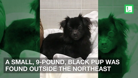 Dog Found Outside Animal Shelter in 7-Degree Weather Tied to a Bench