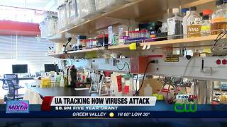 UA study on herpes could impact cancer treatments - Video