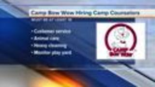Hiring Fair for Camp Bow Wow in Brighton on August 14, 2017 - Video