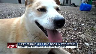 Veterinarian: Heat stroke in pets can happen extremely fast - Video