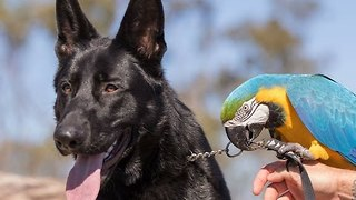 Parrot and Pooch Form an Unlikely Friendship - Video