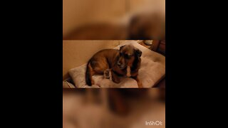 Pup adopts rescue kitten, protects her from other dog