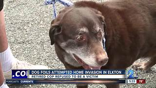 Dog foils attempted home invasion in Elkton