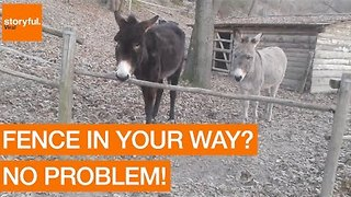 Smart Donkey Finds Smarter Way to Get to Other Side of Fence - Video