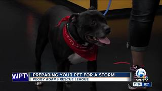 Prepare your pet for hurricane season