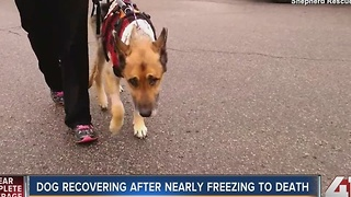 Video shows Caesar the dog recovering after nearly freezing to death - Video