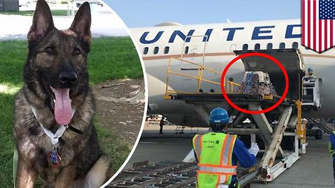 Family Outraged After United Airlines Mistakenly Sends Their Dog to Japan