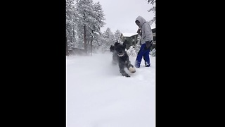 Slow motion captures poodle's excitement for heavy snowfall