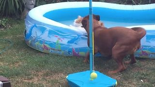 Seeya! Hilarious video shows dog pushing cat into pool