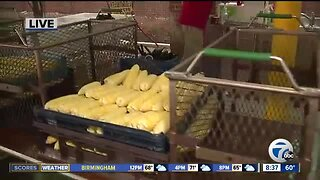 Food and fun at Plymouth Fall Festival