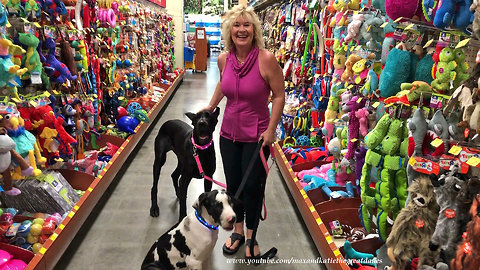 Great Danes check out toys at the pet store