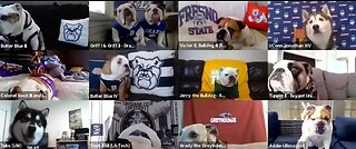 College mascot dogs interviewed via Zoom