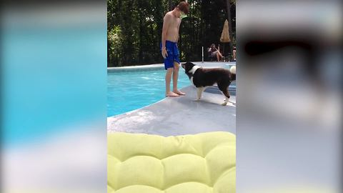 Funny Dog Pushes Boy Into Swimming Pool