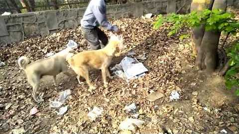 Kind-Hearted Man Feeds Homeless Dogs in South Delhi