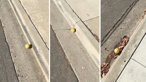 When life gives you lemons… Chase it! Viral video shows man chasing a rolling lemon for a quarter mile down a steep California hill