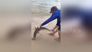 Beachgoers ecstatic over shark caught by fisherman - Video