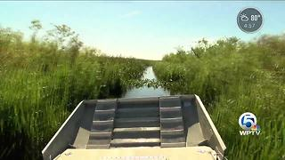 High water levels a threat to wildlife in the Everglades - Video