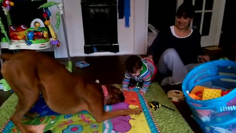 Precious interaction between dog and baby