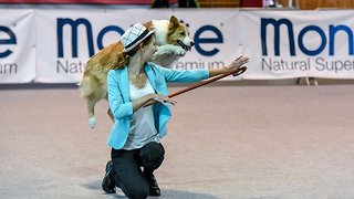Prancing pooch! Dancing dog performs perfect catwalk strut - Video