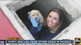 Yay! Puppy rescued from storm drain in Arizona - Video