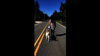 Well-trained husky displays excellent off-leash skills