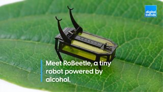 Meet RoBeetle, a tiny robot powered by alcohol.