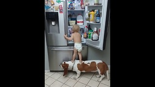 Little Baby and dog stealing food in the refrigerator. - Video