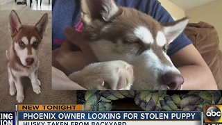 Puppy stolen from Phoenix backyard - Video